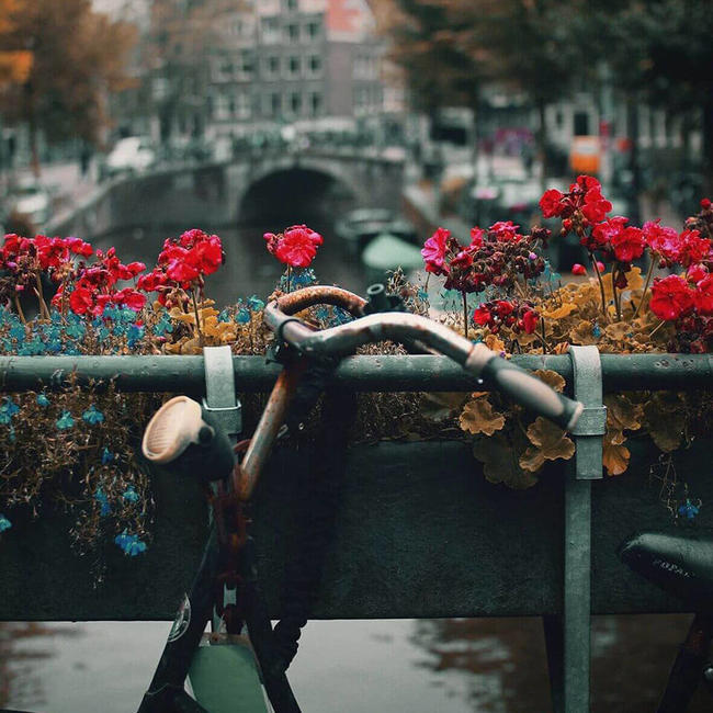 dutch handlebars tied to canal with bright flowers in focus